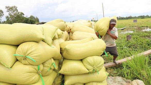 Còn nhiều chuyện phải làm cho chất lượng hạt gạo Việt - Ảnh 1.