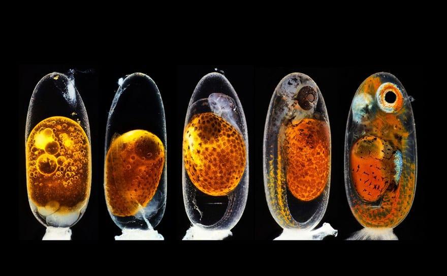 Ngắm thế giới nhỏ bé dưới kính hiển vi - Ảnh 2.