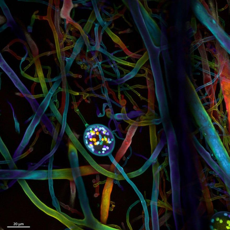 Ngắm thế giới nhỏ bé dưới kính hiển vi - Ảnh 4.