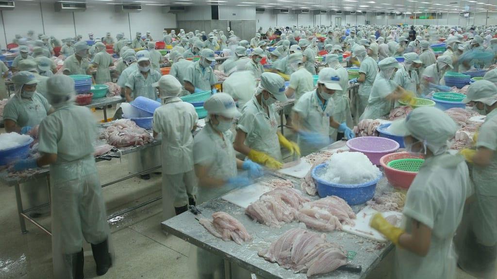 Nafiqad đã có thông tin chính thức về việc cảng Trạm Giang (tỉnh Quảng Đông, Trung Quốc) dừng tiếp nhận hàng thủy sản nhập khẩu từ Việt Nam /// Ảnh TN
