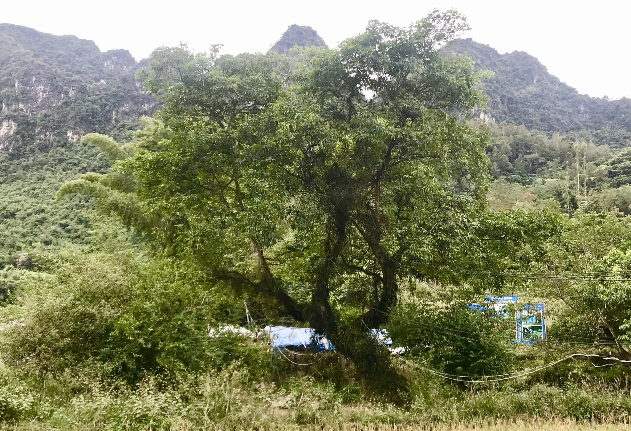 Trồng rừng, phủ xanh rừng trọc cũng là cách làm kinh tế khi người dân nhận được tiền từ dịch vụ môi trường rừng /// Ảnh: Ng.Ng