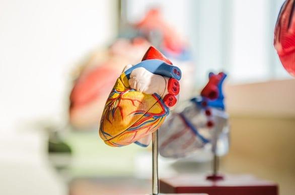 Chế tạo trái tim nhân tạo hoàn chỉnh đầu tiên trên thế giới - Ảnh 1.