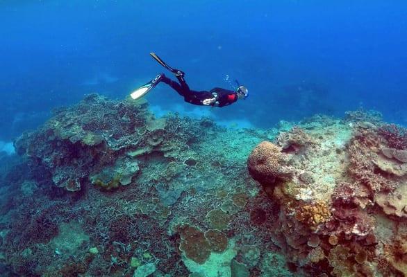 Trung Quốc phủ nhận gây ảnh hưởng đưa rạn san hô Great Barrier vào danh sách nguy cấp - Ảnh 1.