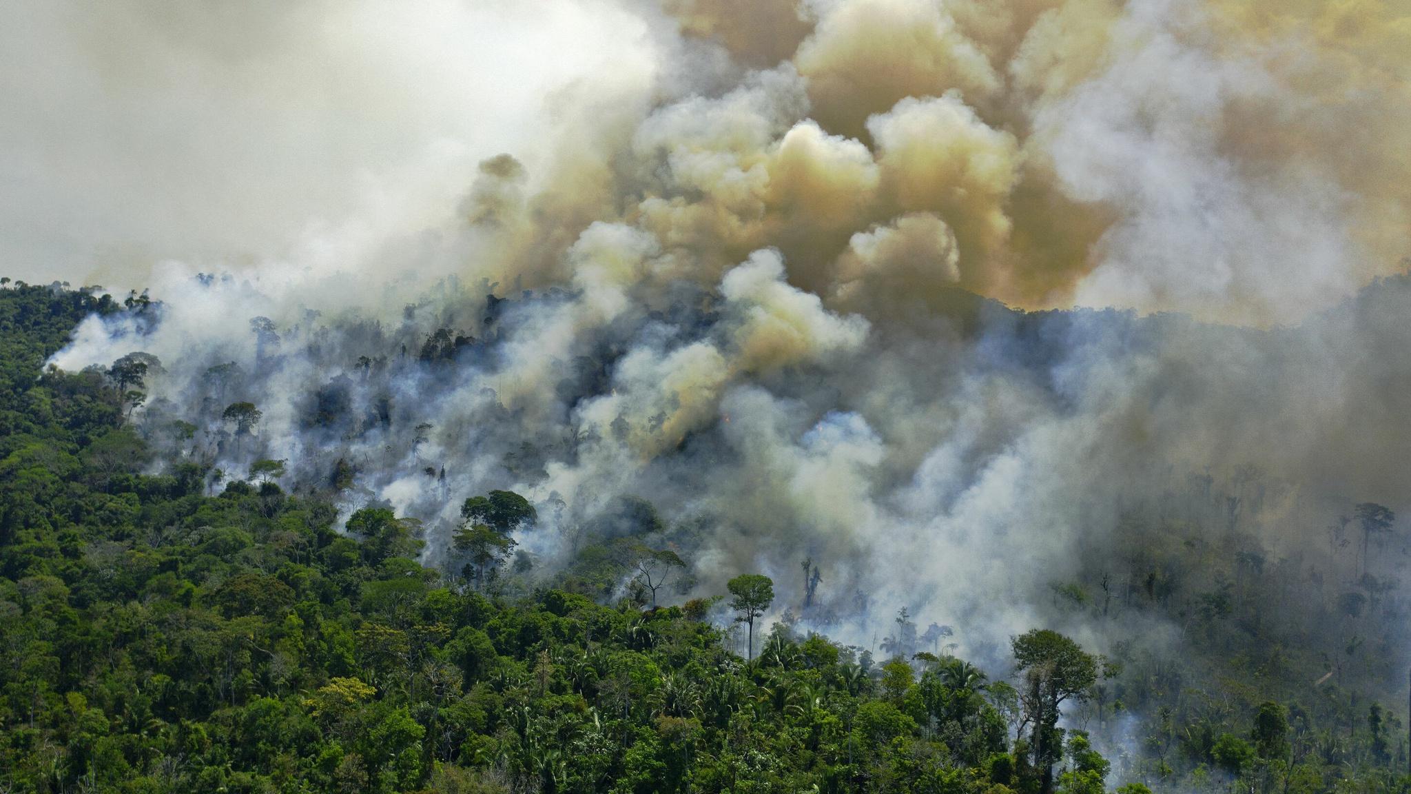 Đám cháy tại rừng Amazon /// AFP