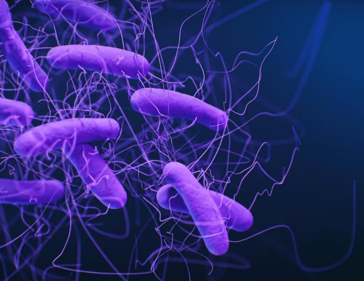 Hình minh họa vi khuẩn clostridioides difficile /// Ảnh chụp màn hình Live Science