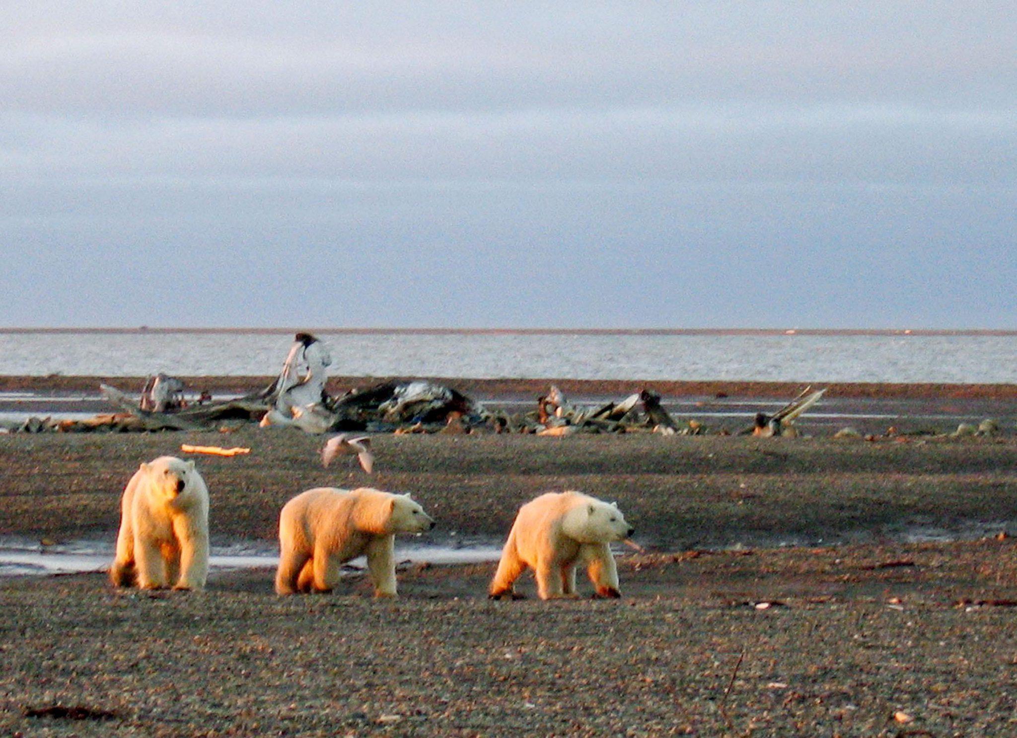 EU muốn cấm khai thác dầu khí, than ở Bắc Cực - ảnh 1