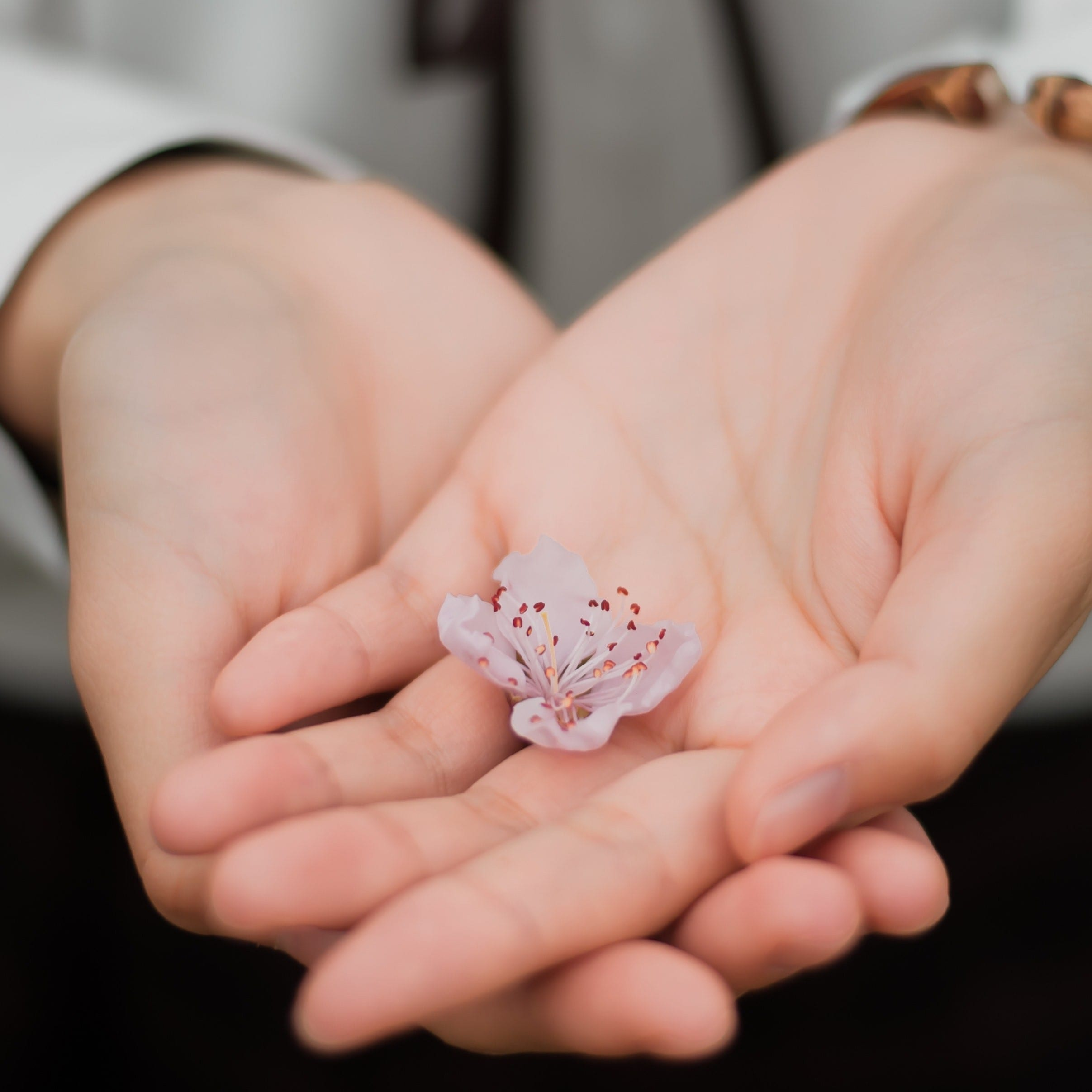 hands holding a small flower