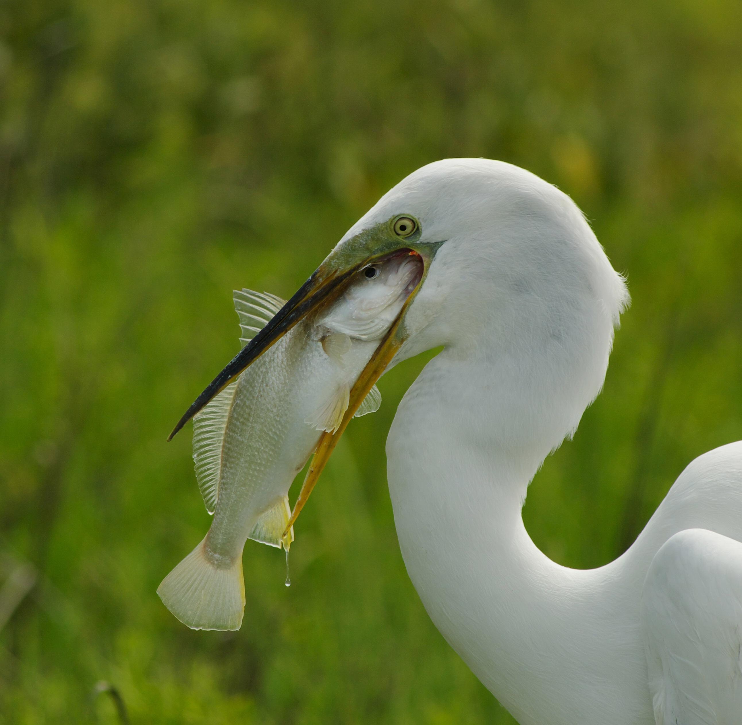 Anastasia State Park Birding