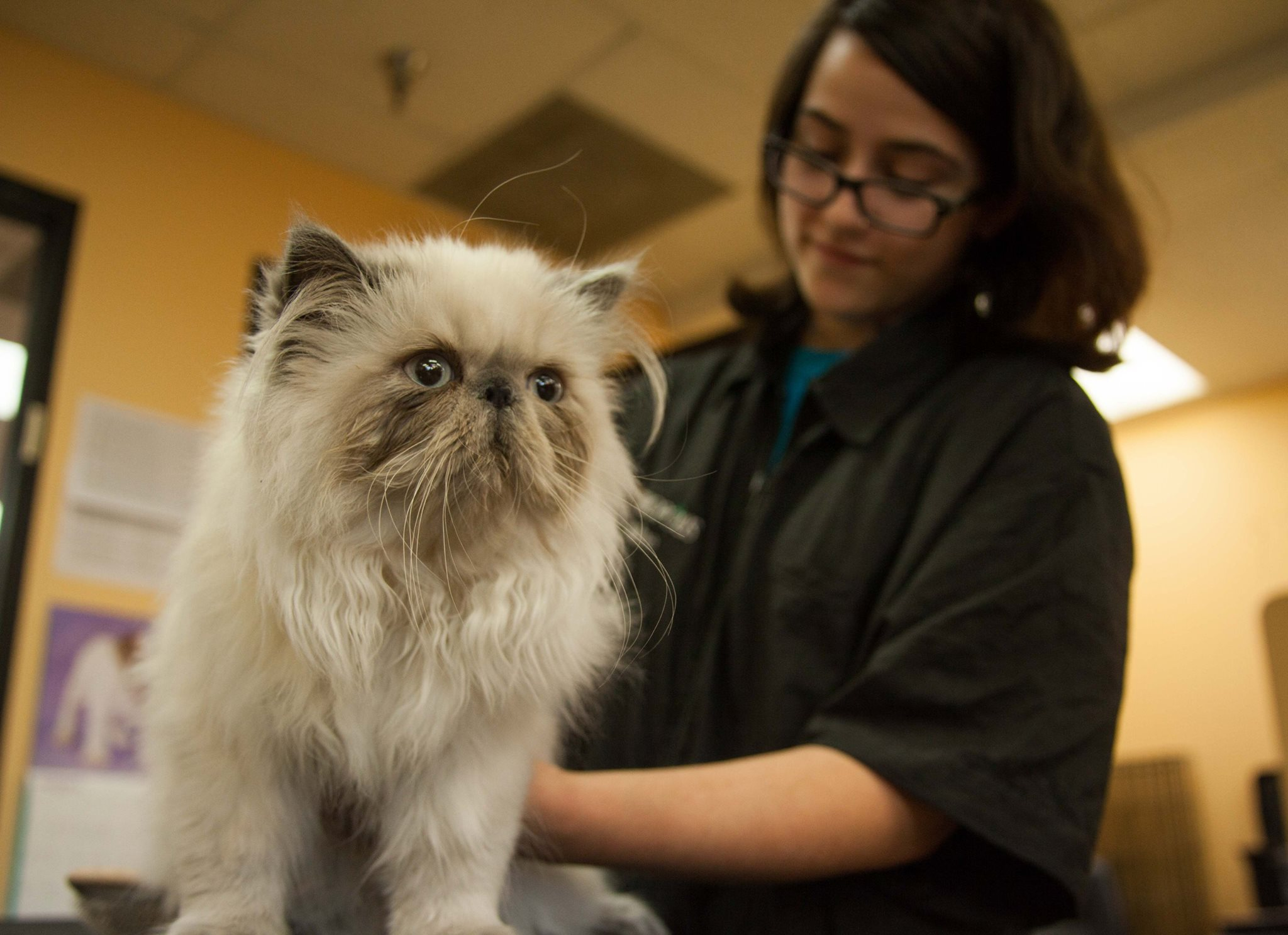 Cat Grooming, Petropolis Pet Resort