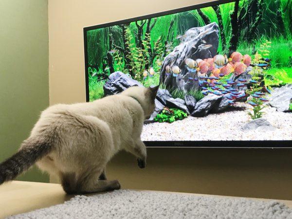 Cat Jungle Renovation