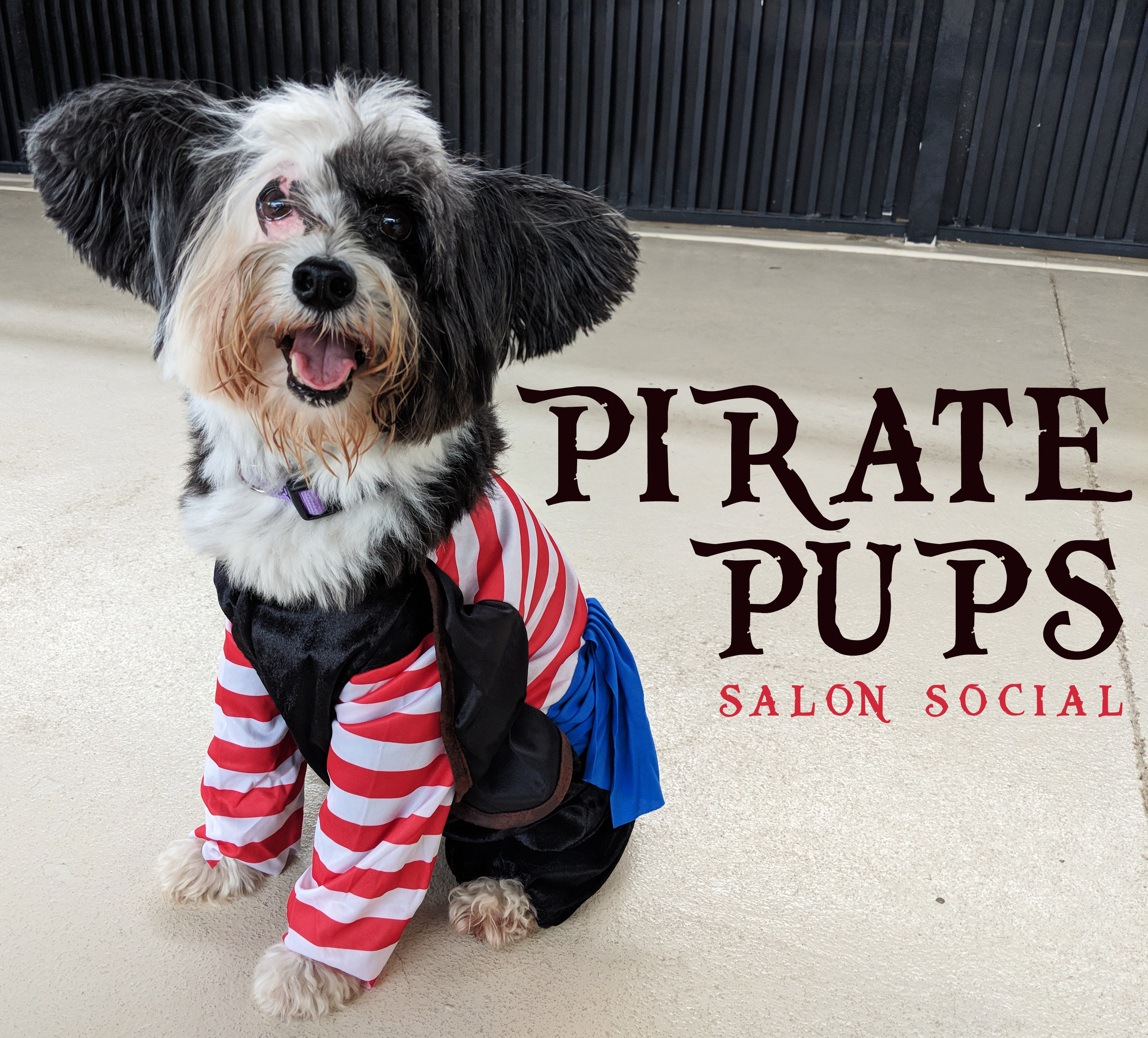 Dog Grooming Party, Talk Like a Pirate Day