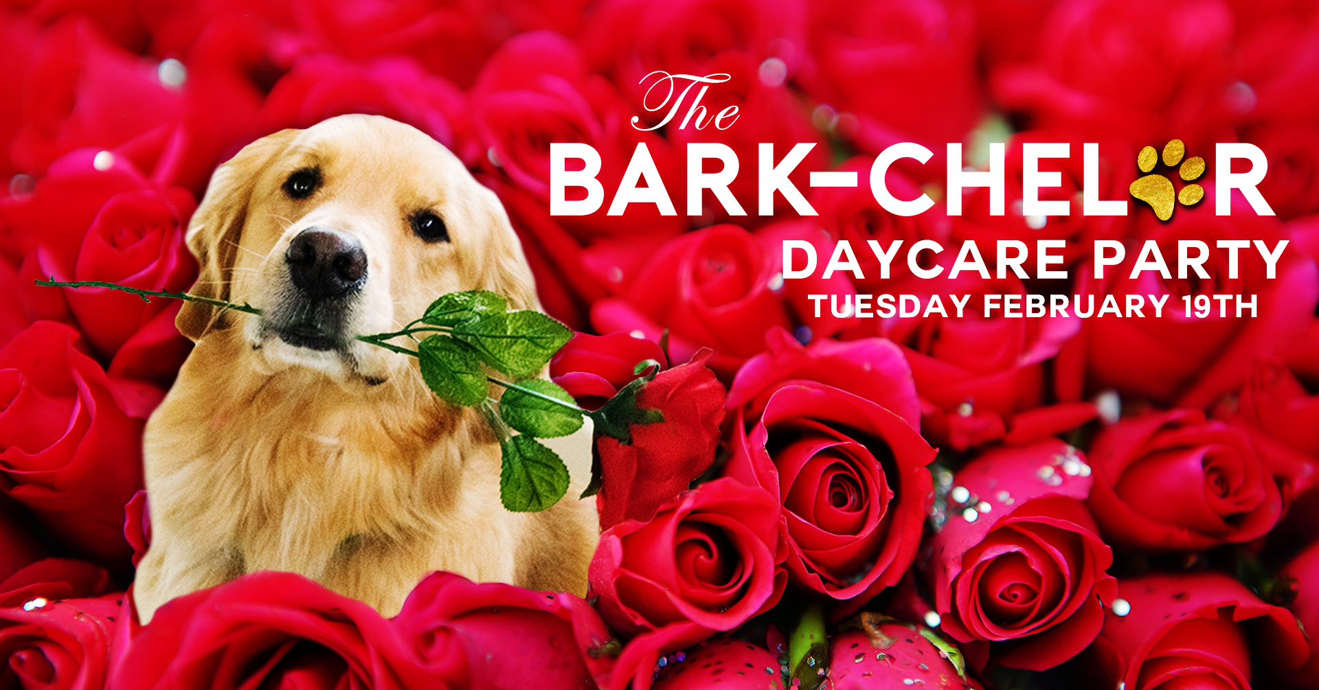 The Bark-chelor Doggy Day Care Party