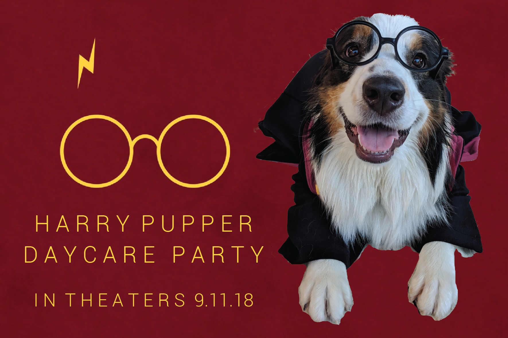 Doggy Day Care Party, Harry Potter