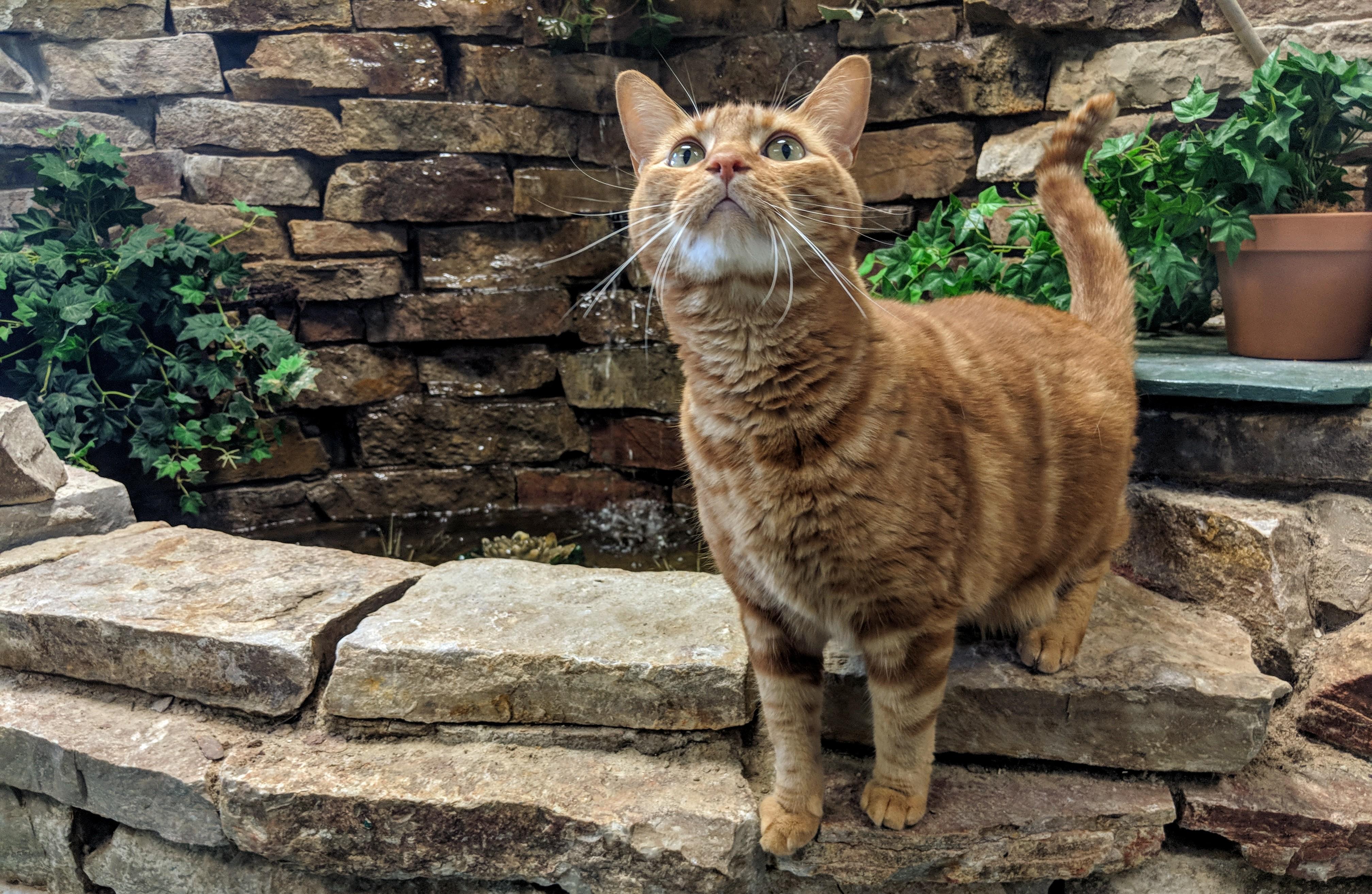 Cat Boarding Pet Empowerment, Petropolis Pet Resort