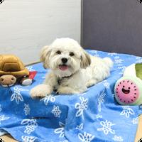 Dog Boarding, Petropolis Pet Resort