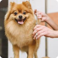 Dog Grooming, Petropolis Pet Resort