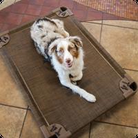 Dog Obedience Training, Petropolis Pet Resort