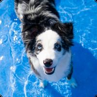 Dog Boarding Activities, Petropolis Pet Resort