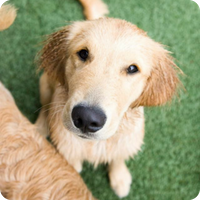 Puppy Dog Boarding, Petropolis Pet Resort