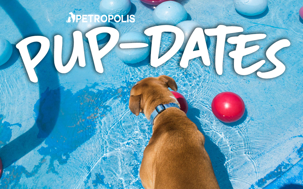 Petropolis Pup-dates June 2019