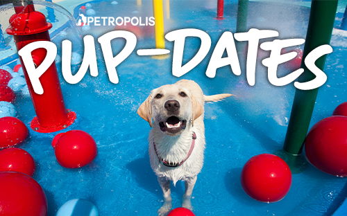 Petropolis Pup-Dates March 2019