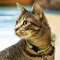 Cat Boarding, Petropolis Pet Resort