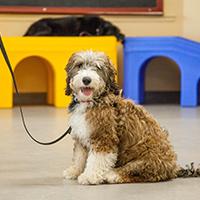 Dog Training, Petropolis Pet Resort