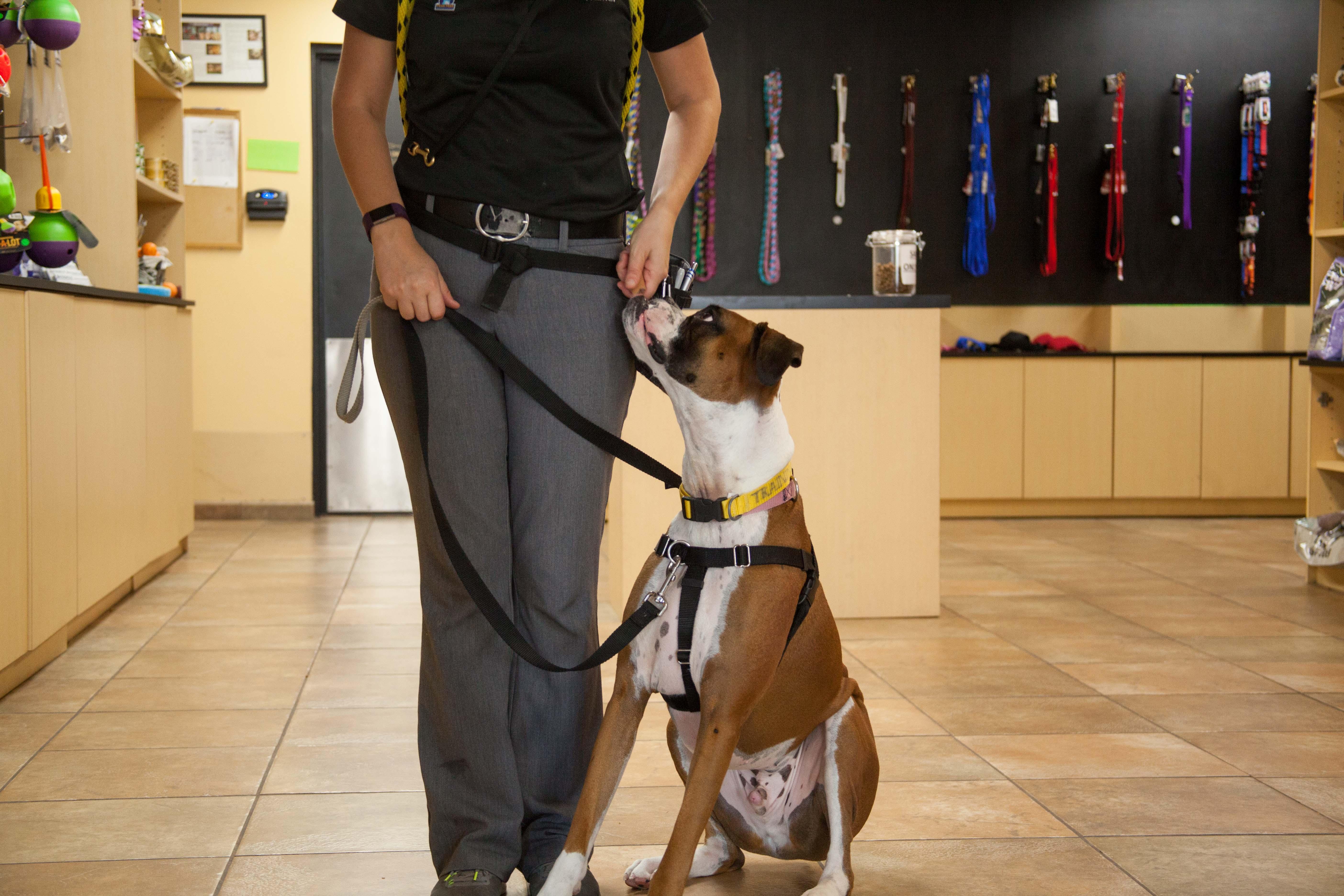 Positive Reinforcement Dog Training, Positive Dog Training St. Louis