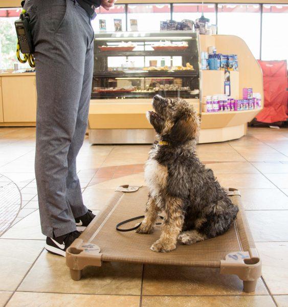Dog Training Near St. Louis