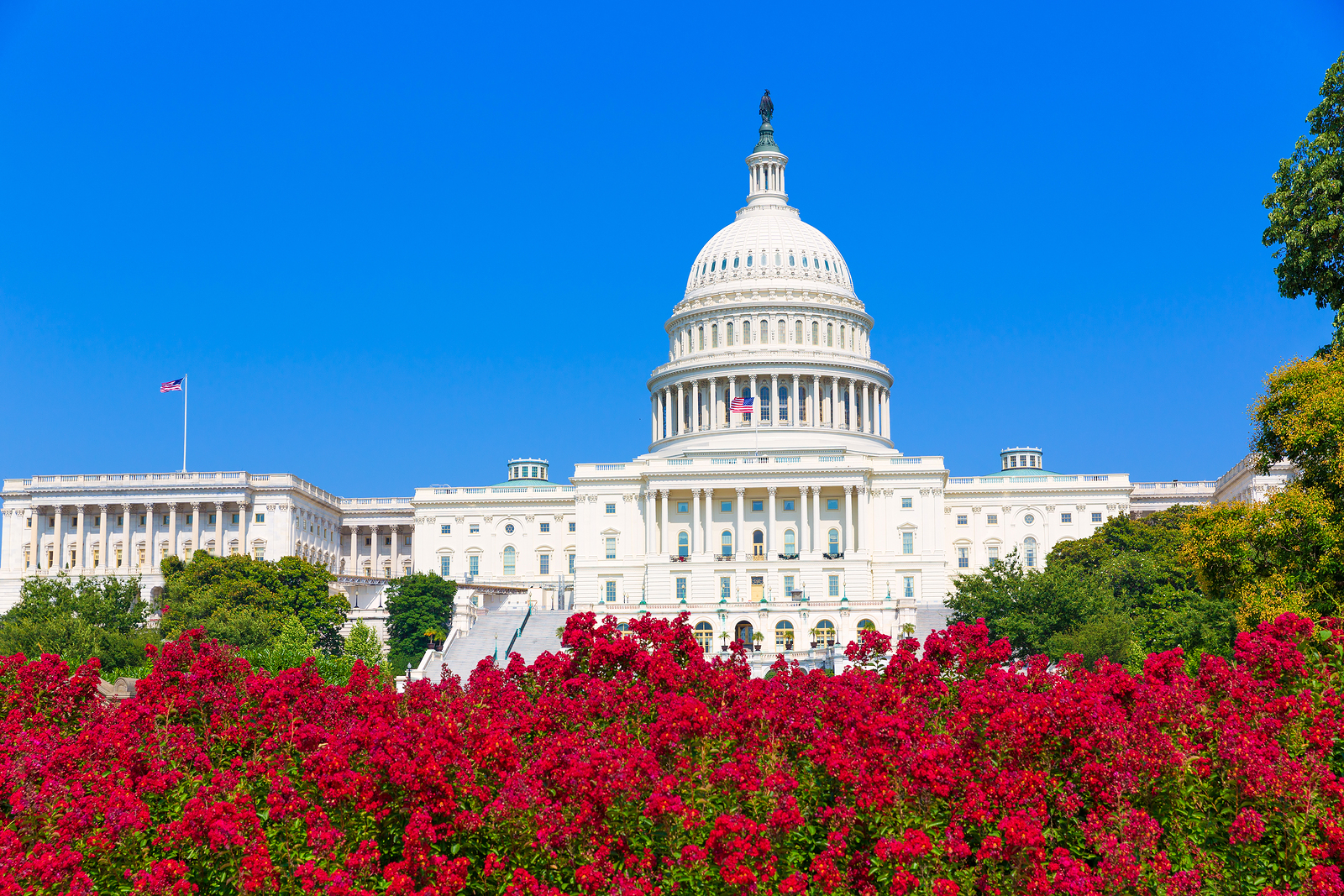 Capitol building Washington DC pink flowers garden USA congress US