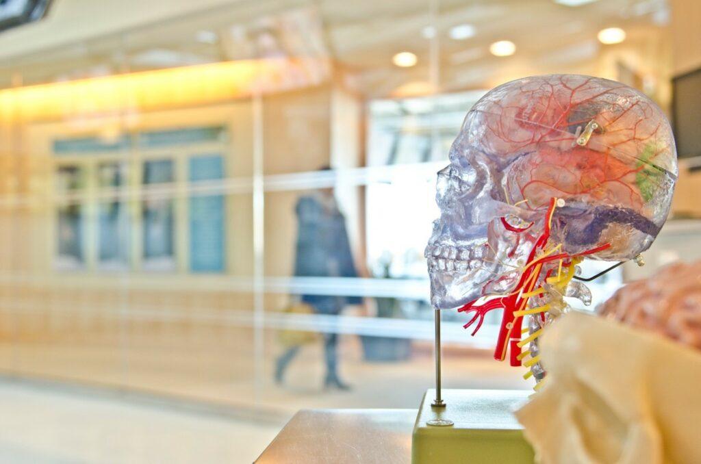 lewy body dementia parkisons disease