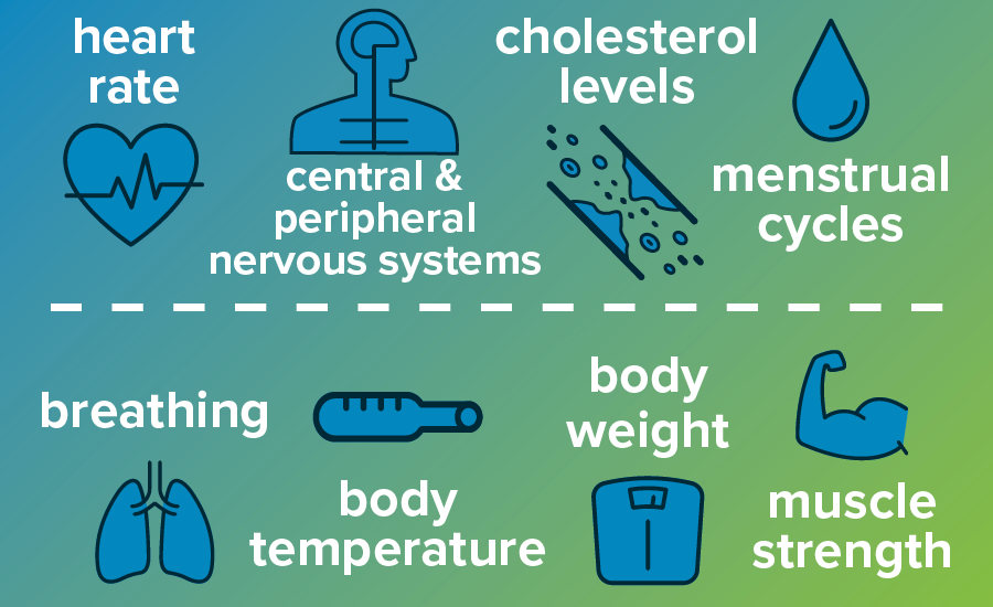 List of body functions affected by the thyroid: heart rate, central nervous system, cholesterol levels, menstrual cycles, breathing, body temperature, body weight, muscle strength