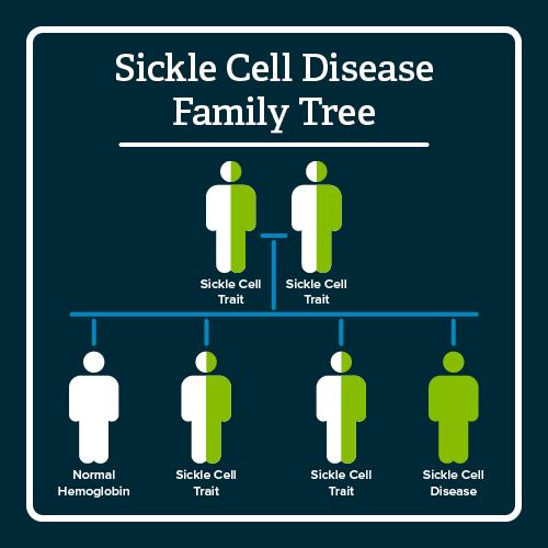SCD family tree