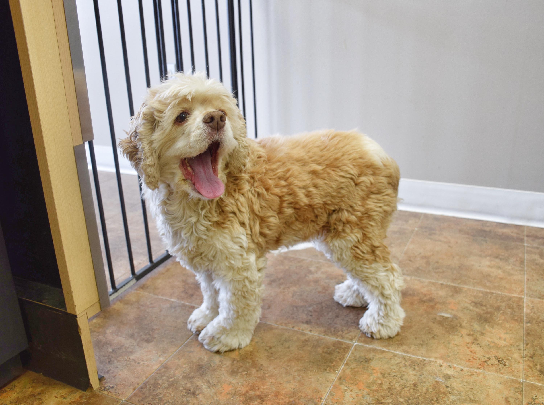 Uptown Pet Grooming client Lulu