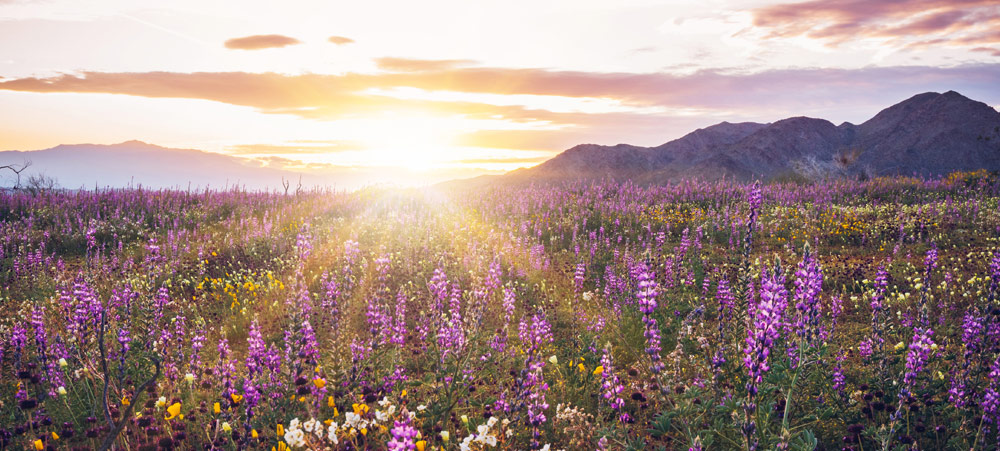 Allergy Relief in Sonoma County