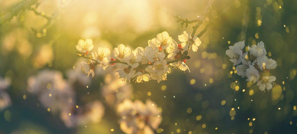 """""""Pollenpocalypse"""""""