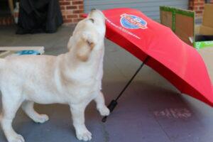Puppy preschool training Socialisation to objects