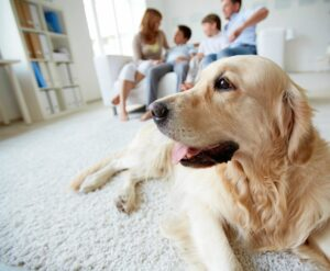 In home dog behavioural training