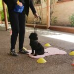 Kindy puppy training class a dog learns to sit on their mt