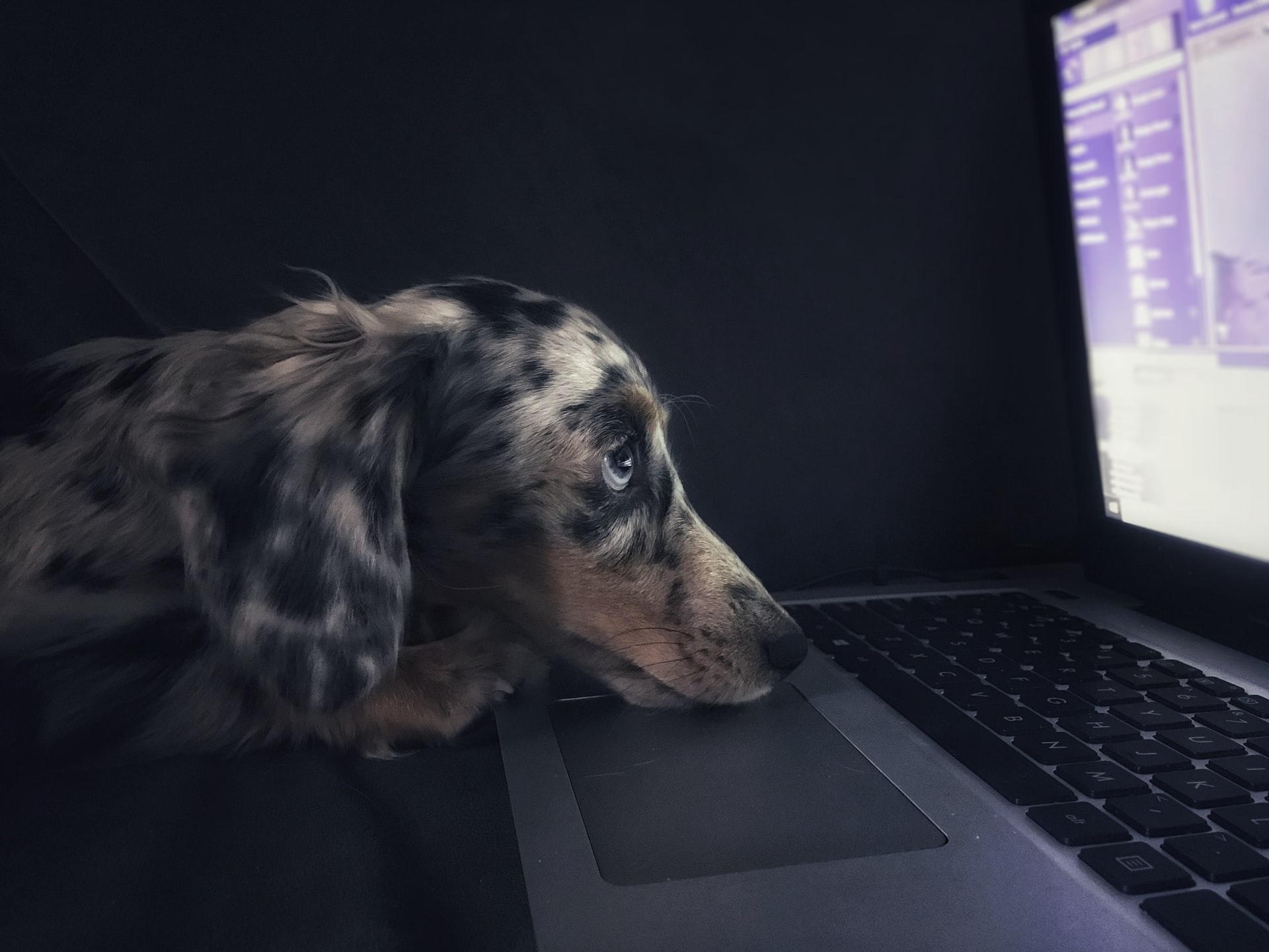 Online puppy preschool