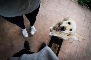 Dog training is unregulated