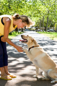 dog training trick class shake hands give paw