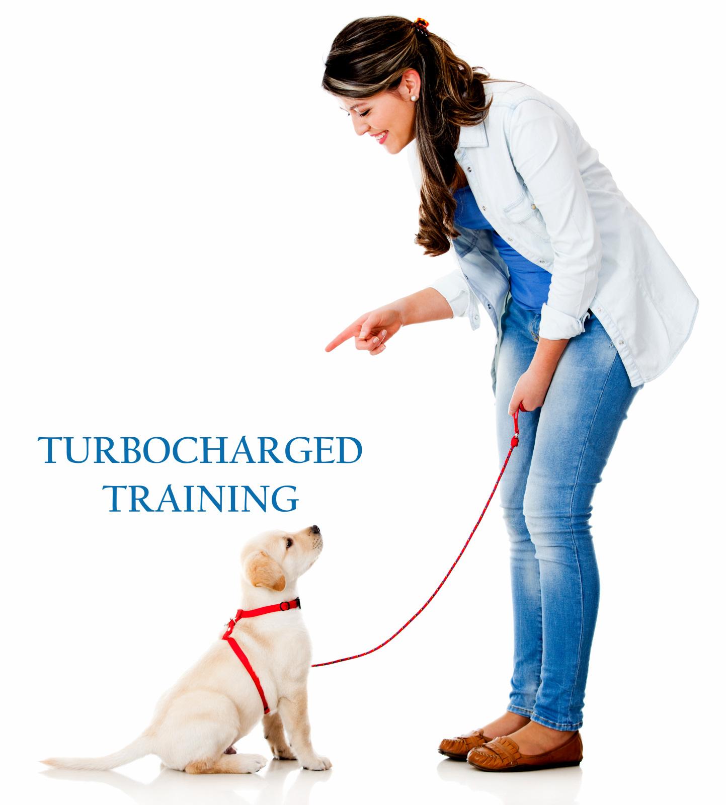 Puppy training to sit
