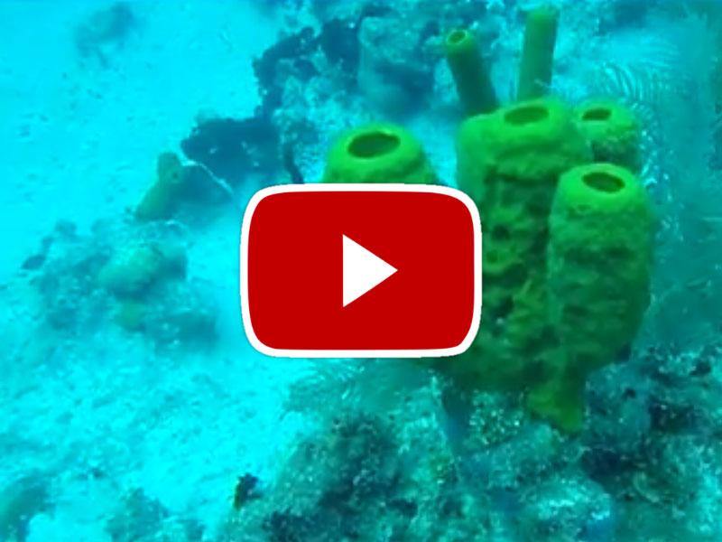 SCUBA Diving in Grand Cayman Islands