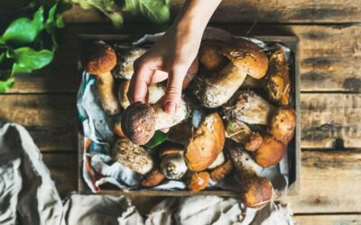 Fall is the best time to forage mushrooms in Spain
