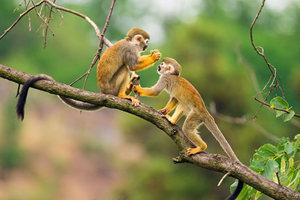 alcoholism monkeys