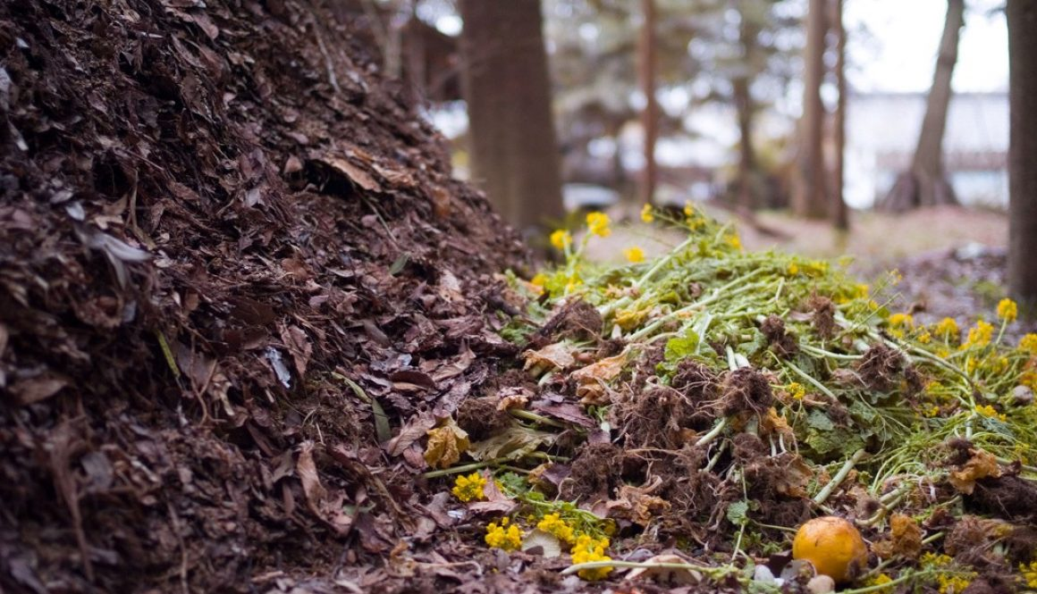 blog_compost_feature