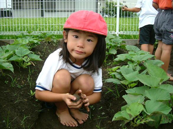 picnoi garden