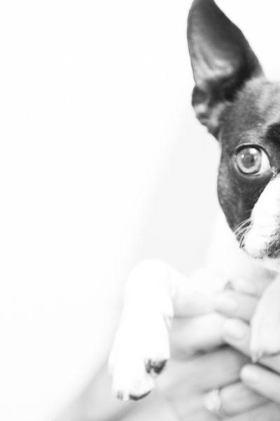 Pet photograhy
