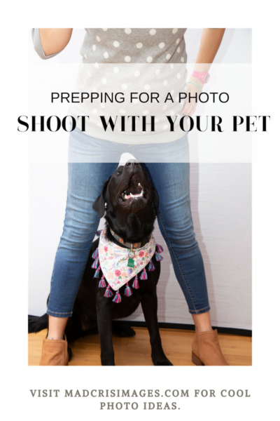 PREPPING FOR A PHOTO SHOOT WITH YOUR PET